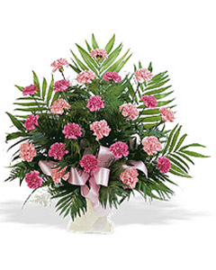 Arrangement of pink carnations