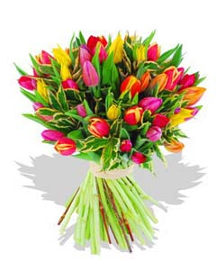 Two Dozen Assorted Tulips