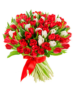Bouquet of red and white tulips