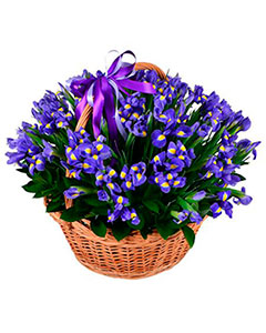 Basket blue iris