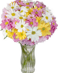 Bouquet of mixed color Chrysanthemums