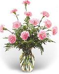 Dozen Pink Carnations