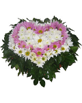 Chrysanthemum heart