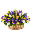 Iris and tulip arrangement