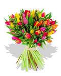 Two Dozen Assorted Tulips