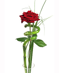 Bunches Single Red Rose